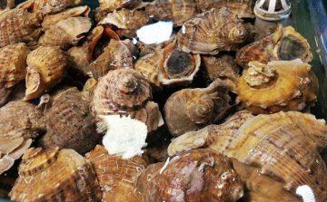 海鲜提货系统,土特产提货系统