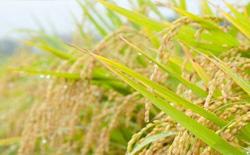 农业种子追溯解决方案,农作物种子追溯系统